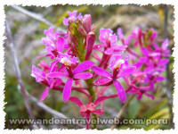 Inca Trail Peru - Orchids Machu Picchu Sanctuary